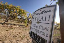 Santa Barbara County's First Syrah