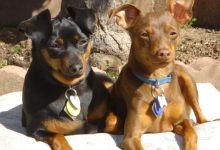 Wild Animal Takes Dog, Injures Another