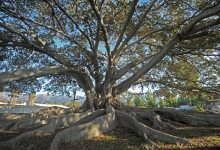 Going Green: The Virtues of City Trees