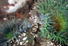California Tide Pools? There's an App for That