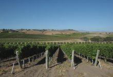 Wine Country Critiques Revised Rules