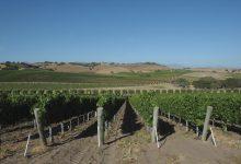Santa Barbara Wine Country Ordinance Shot Down