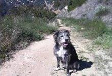 Dog Shot and Killed on Santa Cruz Trail