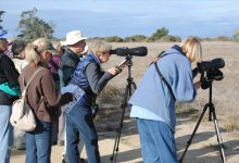 Goleta 'Hot Spots' Lure Area Birders