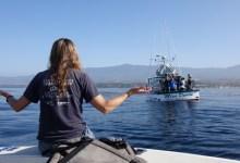 Calmer Seas Prevail in MPA Battle