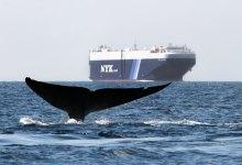 Ship Versus Whale in Santa Barbara Channel