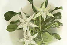 Review: Beauty and Science: the orchid evolves
