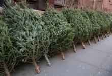 Xmas Tree Recycling