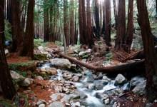 Celebrate Free Redwood Parks Day