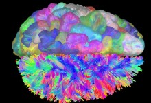 Brain Wiring Investigated at UCSB