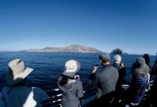 In Search of Rare Seabirds