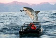 Go Visit Some Sharks