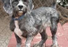 Adoptable Pet of the Week: Casper