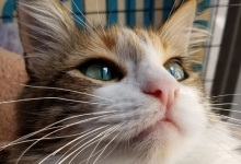 Adoptable Pet of the Week: Purrelle
