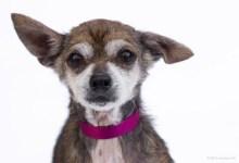 Adoptable Pet of the Week: Bruno
