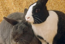 Adoptable Pet of the Week: Albert and Miss Nibbles