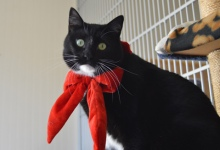 Adoptable Pet of the Week: Stitch