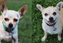 Adoptable Pets of the Week: Bert and Ruth