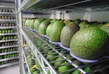 New Produce-Protective Coating Promises to Double Food's Shelf Life
