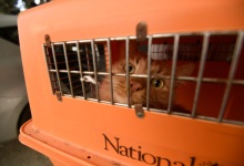 Are Your Pets Ready for Disaster?