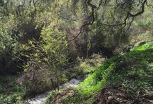 Big $550,000 Grant Will Pay for Veronica Meadows Restoration