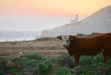 With $165 Million Private Donation, The Nature Conservancy Purchases Cojo Jalama Ranches