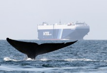 California's Whale Protection Program Expands