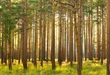 Our Forests Need Help
