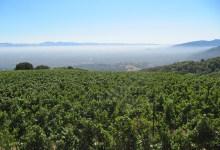Gallo Buys Historic Santa Maria Valley Vineyard
