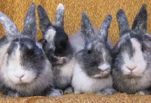 Raj, Sheldon, Howard, and Leonard