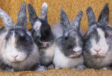 Raj, Sheldon, Howard and Leonard
