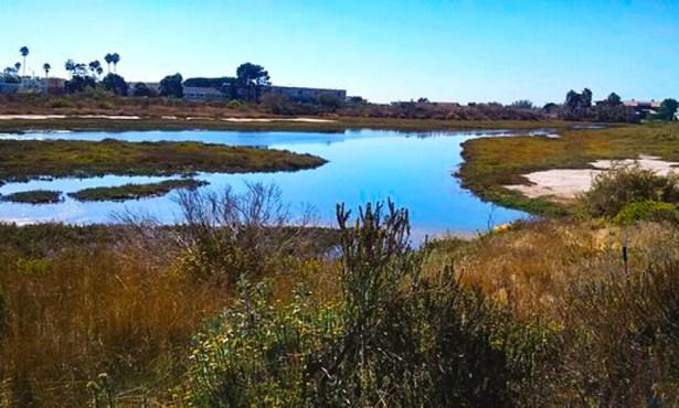 Wetlands Store a Lot of Carbon