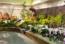 Santa Barbara International Orchid Show This Weekend