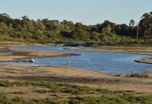 Restoring the Devereux Wetlands
