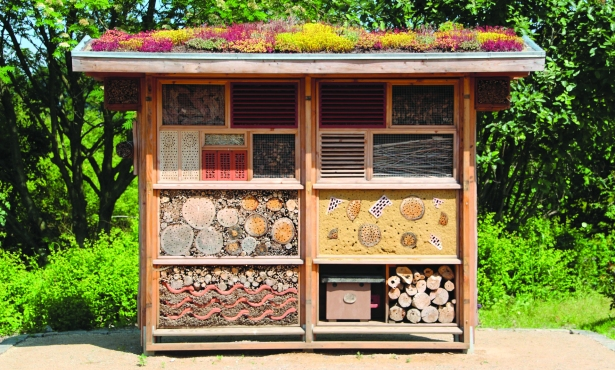 Cities as Sanctuaries for Bees, Insects, and Birds