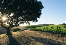 Big Bucks for Santa Barbara County Vintners Association