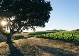 Santa Barbara County's Wine BID Abandoned