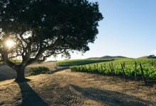 Could Add-On Fee Better Market Santa Barbara Wines?