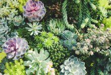 Santa Barbara Home & Garden Guide for 2019