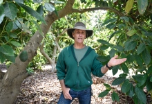 Avocado and Cannabis Growers Struggle over Insecticides
