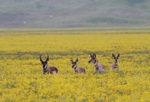 Branching Out On the Carrizo Plain