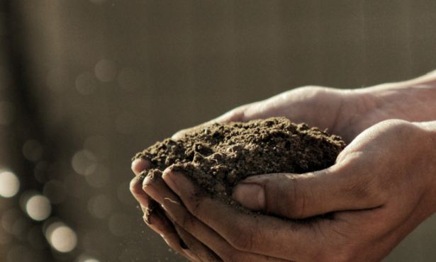 Are Healthy Soils Our Salvation?
