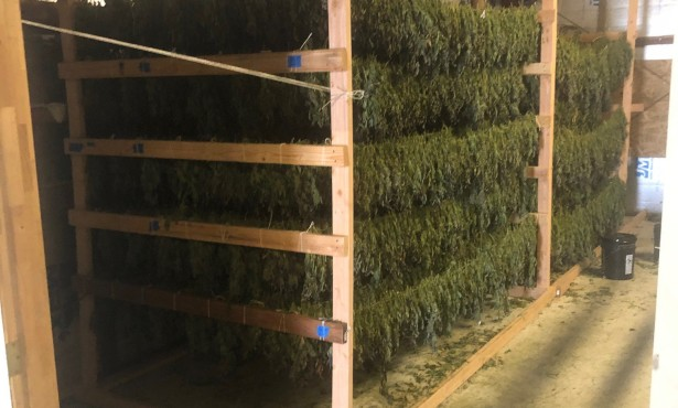 3,000 Pounds of Cannabis Seized near Goleta