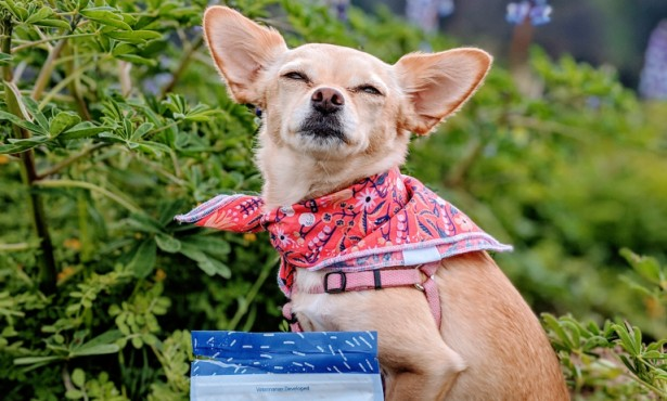 S.B. Dog Wins National Modeling Contest