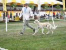 Santa Barbara Kennel Club Dog Shows