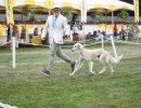Santa Barbara Kennel Club Dog Shows