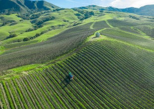 Pretty, Patience, and Pinot Noir Converge at Peake Ranch