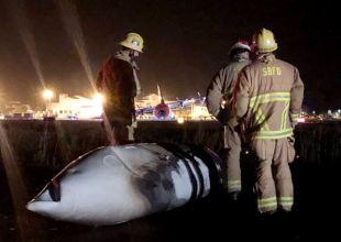 Crash-Landed C-130 Closed Santa Barbara Airport, Open Again