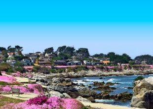 """Nature Lovers """"Flock"""" to Asilomar for End-Of-Season Vacations"""
