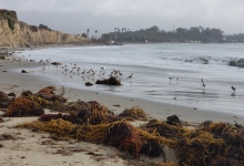 The Bane of Beach Biodiversity